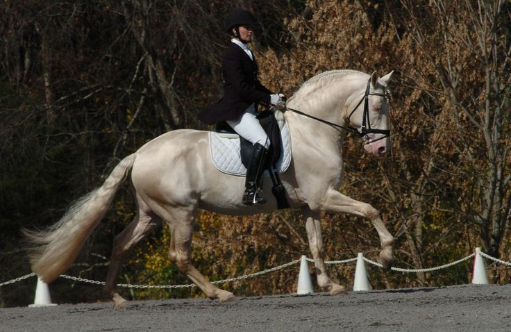 JER_1382 | JC Andalusians