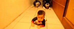 Honden Doen Kruipende Baby Na   #PrutsFM