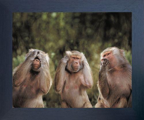 Monkeys Hear No Evil See No Evil Speak No Evil Espresso Framed Art Print Poster (18×24)