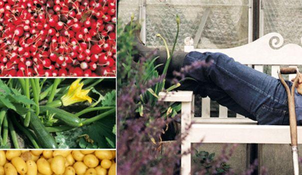 Jardinier débutant ou simplement adepte de la simplcité, voici la check-list des fruits et légumes les plus faciles à cultiver dans un jardin potager. Radis, tomates, haricots... A vous le potager !