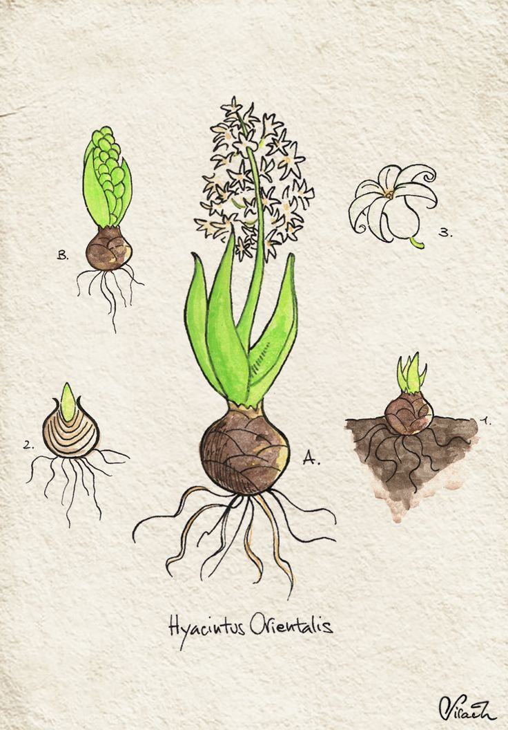 I've always been fascinated by botanical illustration, so I tried to make one…