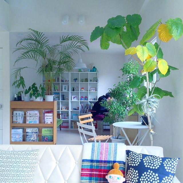 masami.hさんの、部屋全体,観葉植物,本棚,ナチュラル,グリーン,窓際,マリメッコ,北欧,吹き抜け,多肉植物,カリモク60,ベンジャミン,ウェグナー,エアプランツ,ウンベラータ,キセログラフィカ,のお部屋写真