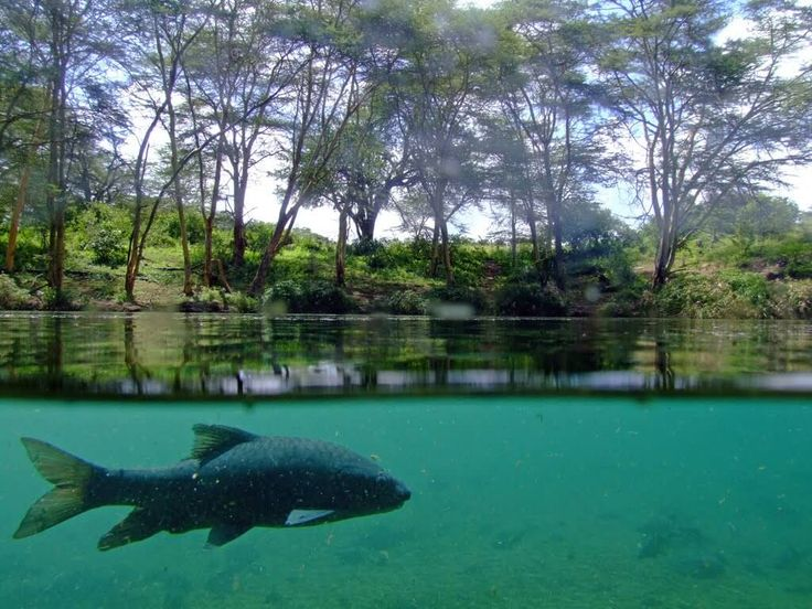 Mzima Springs (Tsavo National Park West)