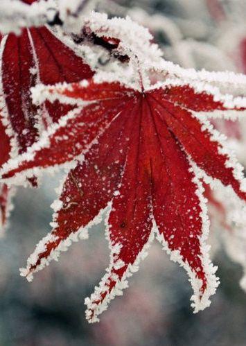 Early Snow #photos, #bestofpinterest, #greatshots, facebook.com/...