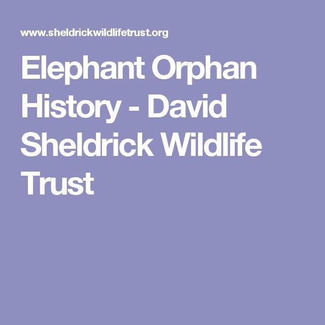 Elephant Orphan History - David Sheldrick Wildlife Trust