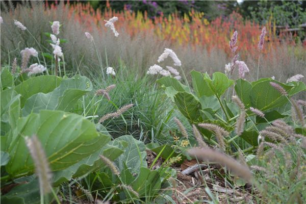 Plant a Grassland Garden with indigenous plants in 10 steps