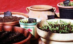 Wysiewanie nasion - przygotowywanie rozsad w domu   http://ZielonaTerapia.pl/blog/wysiewanie-nasion-przygotowywanie-rozsad-w-domu