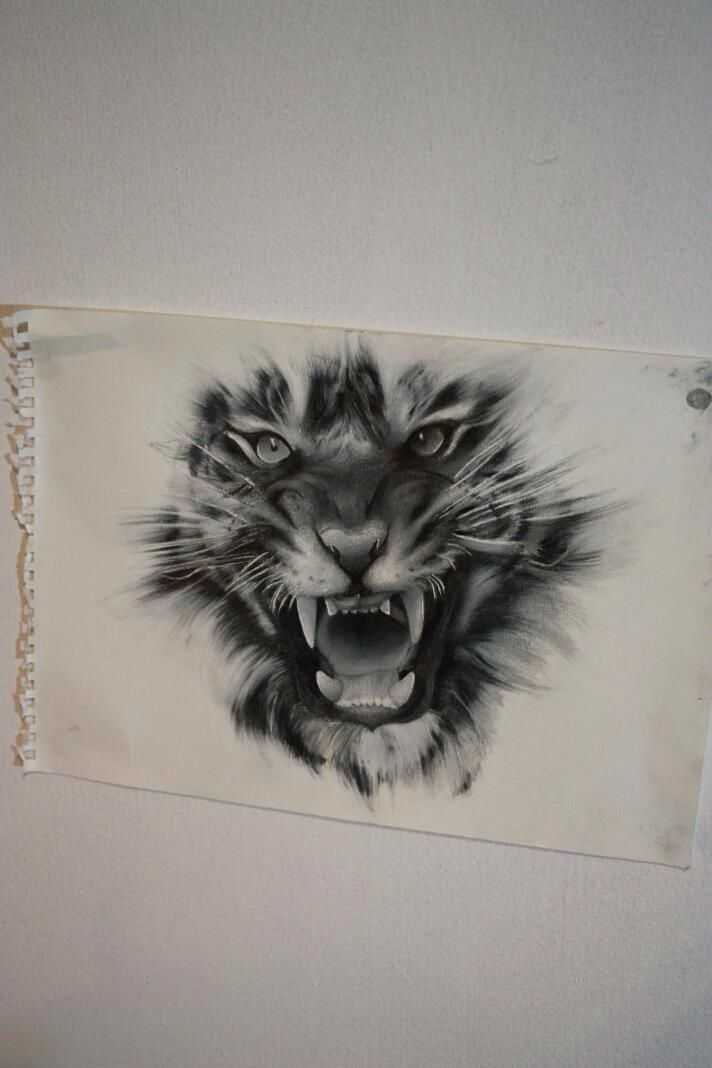 Kinda want this but torn between this or a lion
