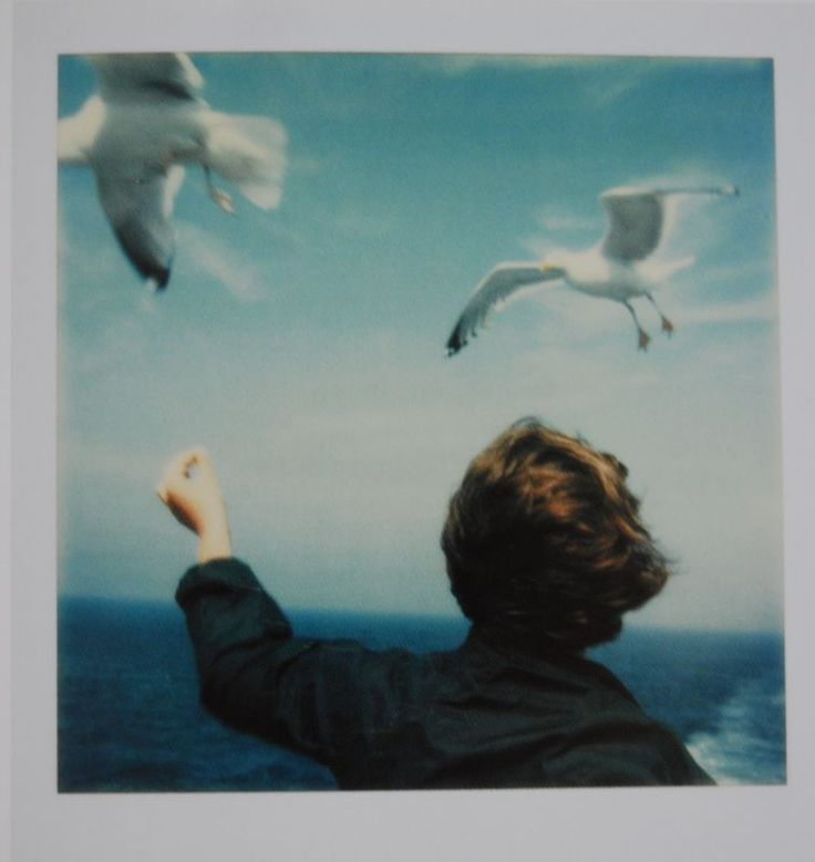 Seagulls and boy - Peter Jones