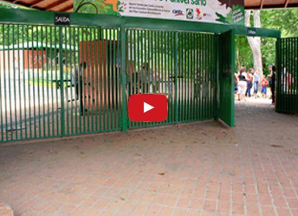 Murió el Puma en Caricuao  http://www.facebook.com/pages/p/584631925064466