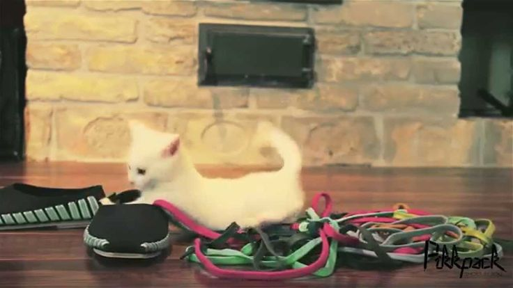 Cutest little kitten meets shoelaces for the first time ever! @Pikkpack Shoes by YOU @BestOfKickstarter