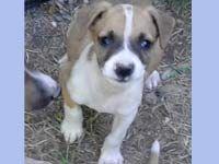 perritos en adopcion,perros en adopcion,cachorros en adopcion, adopcion de perros,adoptar un perro,Perritos de Villegas,perritos