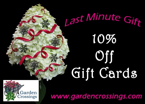 Save 10% Now on all Garden Crossings Gift Certificates. There is still time to buy that last minute gift!  https://www.gardencrossings.com/index.cfm/fuseaction/giftCerts.main/index.htm