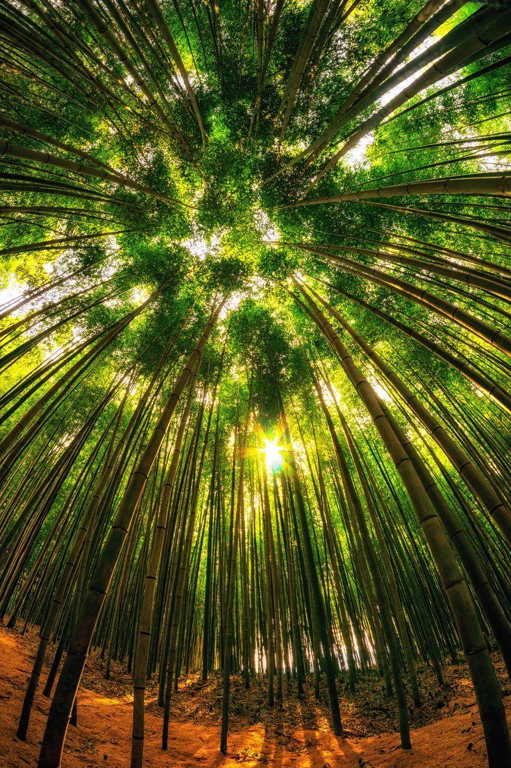 Damyang Bamboo Forest 1 Samyang 8mm