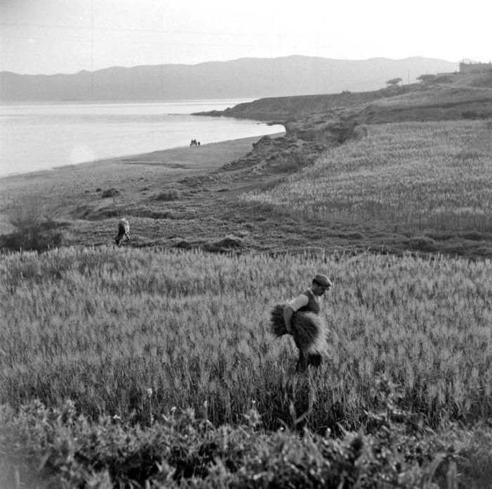 Κάρυστος 1950-55