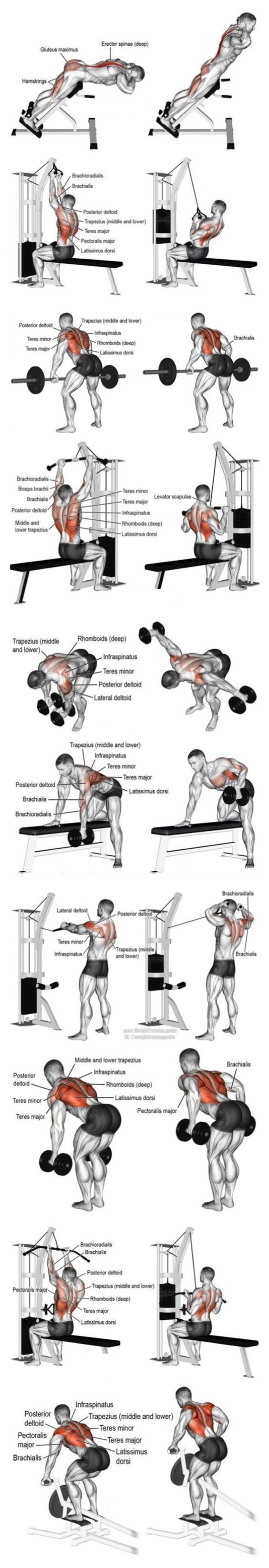 Body building fitness exercises to shape your mussel. BodyCraft gym equipment sale on Altitude Fitness Outlet https://www.musclesaurus.com/bodybuilding/