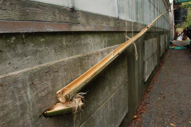 Drip Irrigation fed by rainwater harvesting