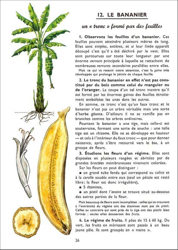 Manuels anciens: Animaux et plantes des pays tropicaux : leçons de choses et exercices d'observation CM (Nathan, 1963)