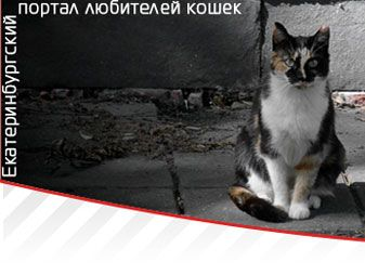 Как правильно кормить котят и кошек | Обшая информация | Статьи о кошках | Екатеринбургский портал любителей кошек