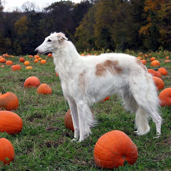 Can Dogs Eat Pumpkin? What About Other Fall Vegetables?
