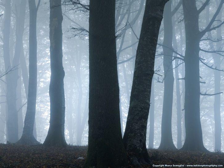 Mai stati a caccia di fantasmi? Allora provate a farvi un giro in un bosco della #Tuscia. http://hauntedplacesintuscia.weebly.com/storie/esperienze-boschi-nebbiosi Photo M. Scataglini #scoprirelatuscia #Italy Caprarola in Viterbo, Lazio