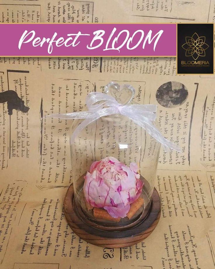 bloomeria.roSofisticat, dar delicat in acelasi timp, bujorul poate fi oferit cu absolut orice ocazie. De sub cupola de sticla, un bujor #nemuritor va fi cu siguranta un cadou extrem de apreciat!  #BujorCriogenat #FloriCriogenate #Bloomeria #HappyMonday