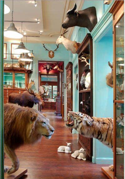 Deyrolle: tienda-museo de Historia Natural en la rive gauche de París
