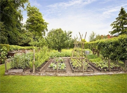 Wherever we end up buying our future home we definitely want room for a veggie patch...and maybe some chickens!