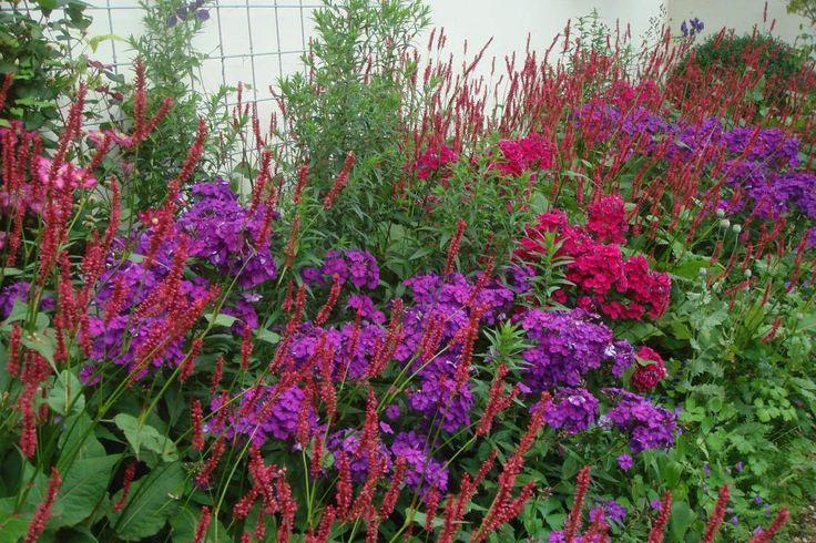 rote und lila stauden - Lebendige Kontraste oder ruhiges Ton-in-Ton: Blütenfarben sind ein wichtiges Element der Gartengestaltung. Mischen Sie die beiden Prinzipien jedoch nicht wild durcheinander, sondern entscheiden Sie sich für ein Grundkonzept für eine ansprechende Staudenkombination.