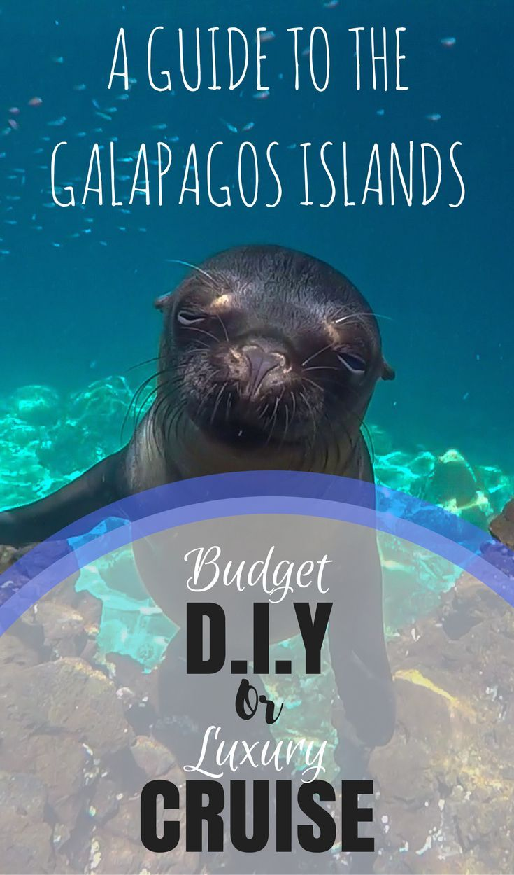 The Galapagos Islands are a unique archipelago just 2 hours flight off the western coast of Ecuador. It's home to species found nowhere else in the world as well as those who specifically evolved to fit in with the Galapagos' surroundings. Wildlife includes the giant tortoise, blue footed booby, flightless cormorant and the Galapagos fur seal. If you want to visit the Galapagos you can choose to take a cruise or do it yourself. Here we weigh up both options so you can make an informed…