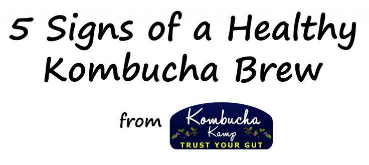 5 Signs of a Healthy Kombucha Brew