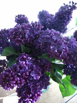 Lilacs...I can smell them from here!