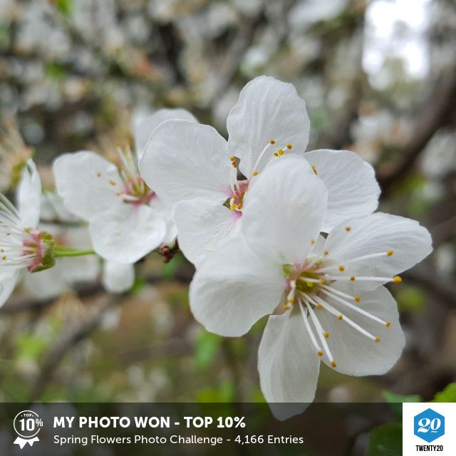 My photo was voted Top 10% in the Spring Flowers challenge on Twenty20. See the entries.