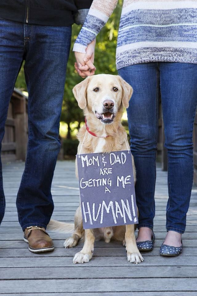 Cute pregnancy announcement with puppy