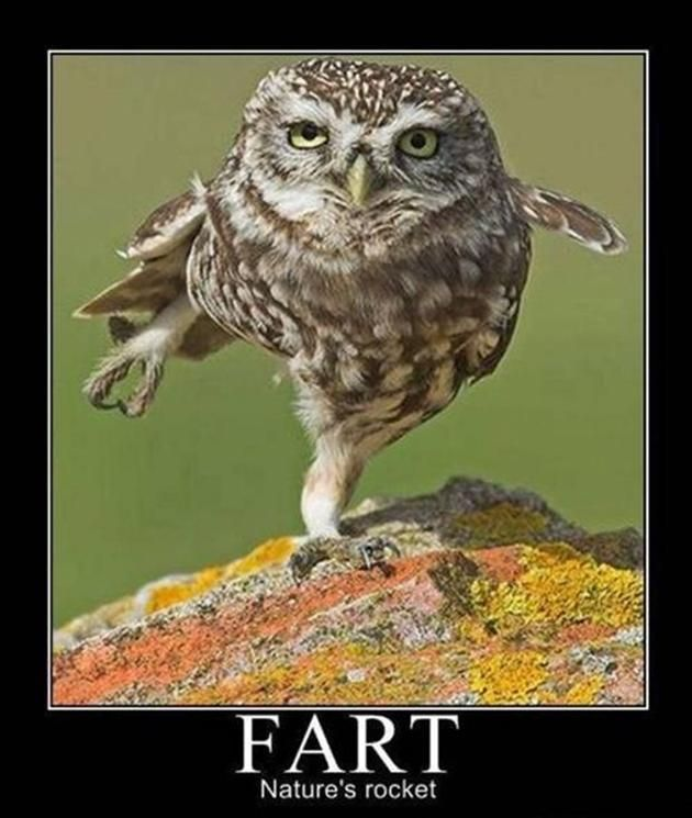 Funny+Owl+Quotes | ... , 2012 at 630 × 745 in Funny Farts (18 Pics) . ← Previous Next