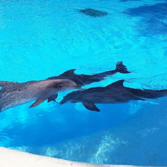 Siegfried & Roys Secret Garden & Dolphin Habitat