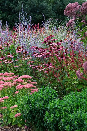 Plant combination of sedum and echinacea with Russian sage as the back drop