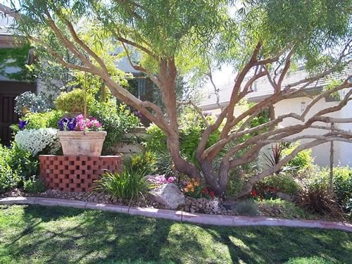 Backyard Landscaping Las Vegas : Landscaping in Las Vegas  Southwest gardens & landscaping