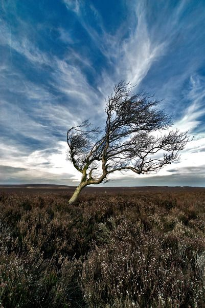 A lone tree in windy Derbyshire. Derbyshire by Gediminas Uzdonas.