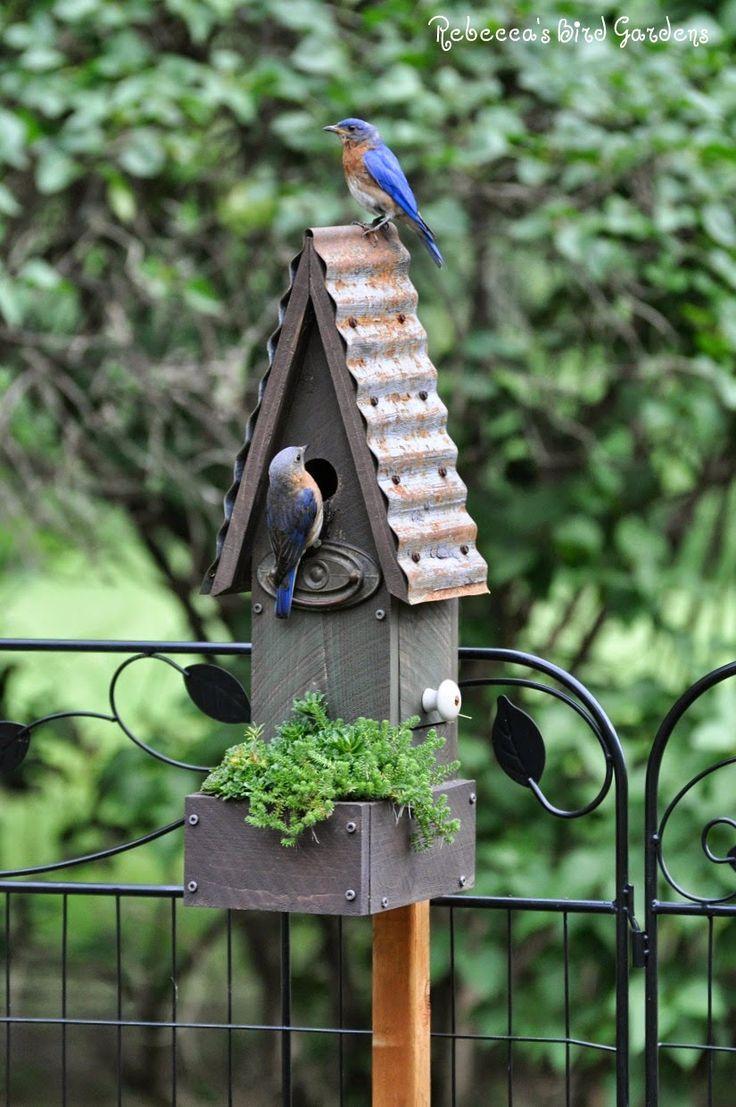 oiseau sur son perchoir et petite maison dans le jardin