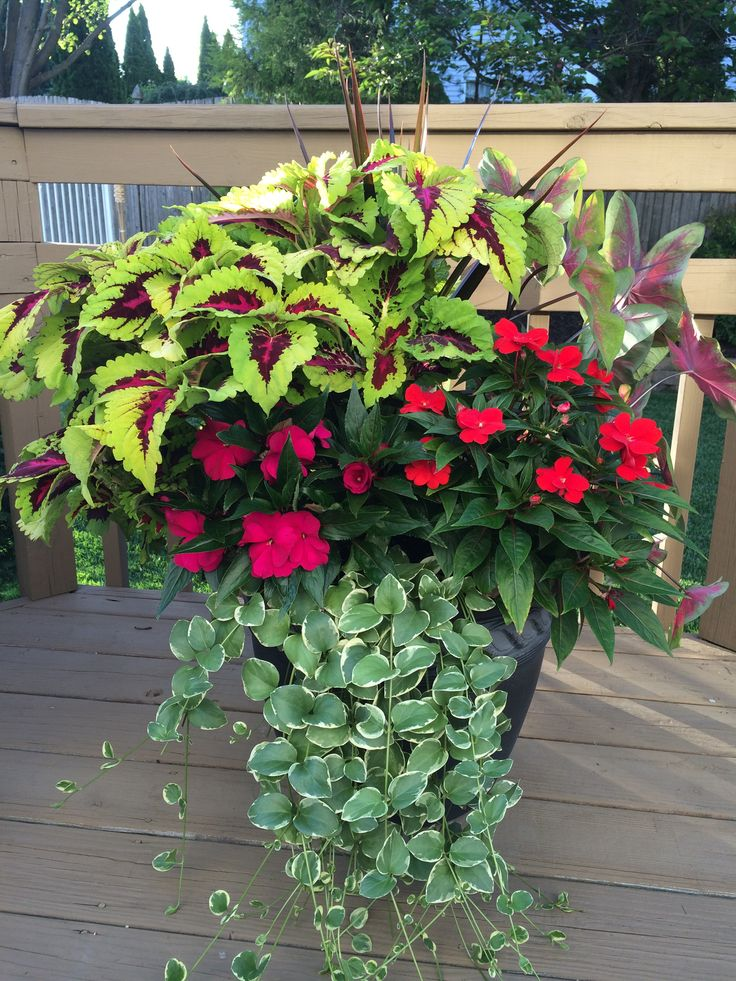 Pin On Container Gardening