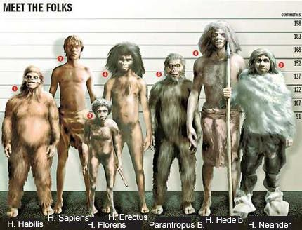 From left to right: Homo habilis, Homo Sapiens, Homo floresiensis, Homo Erectus…