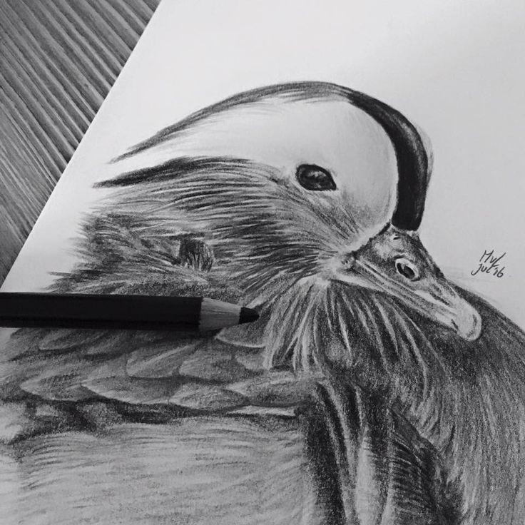 Pencil drawing mandarin duck   • mariellevanleeuwen@live.nl • AR•T•INT • www.facebook.com/artintx • instagram @artint