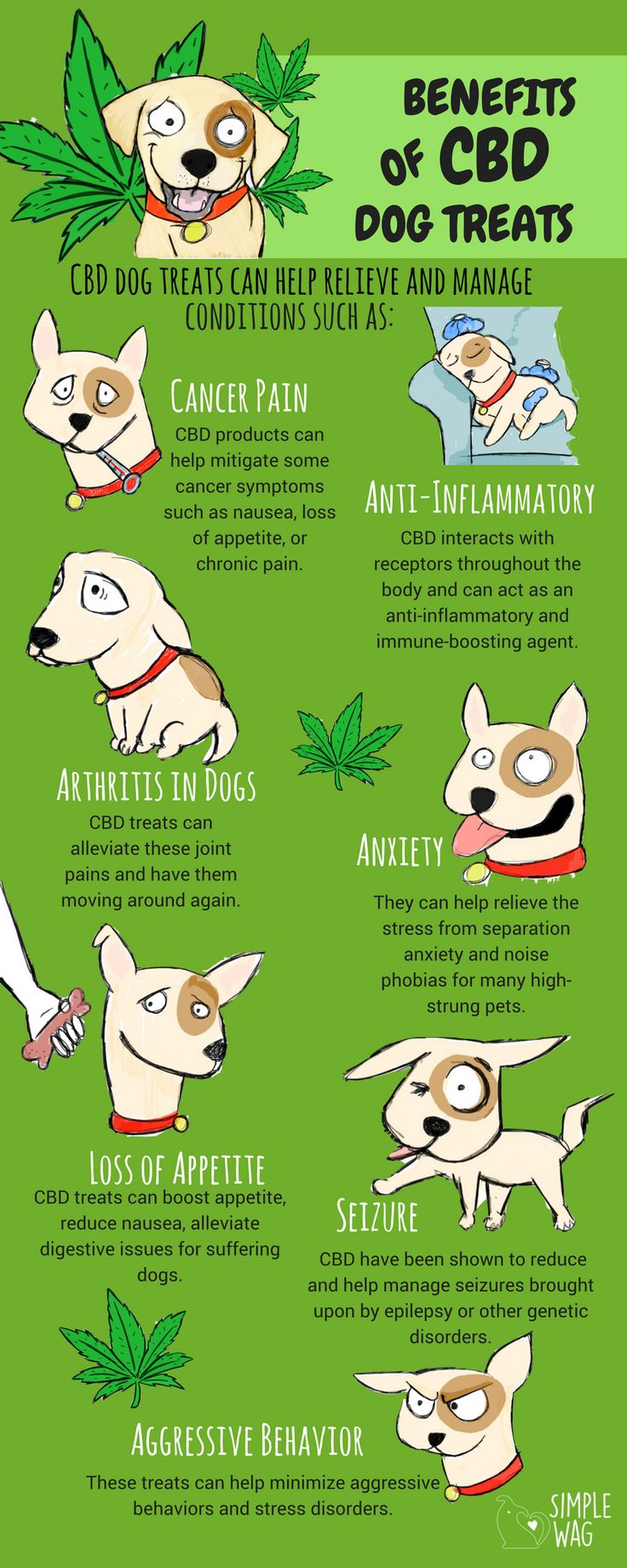 Why CBD Dog Treats Are The Best For Your Dog - Infographic