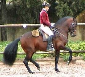 Alter Real Horse – Breeds