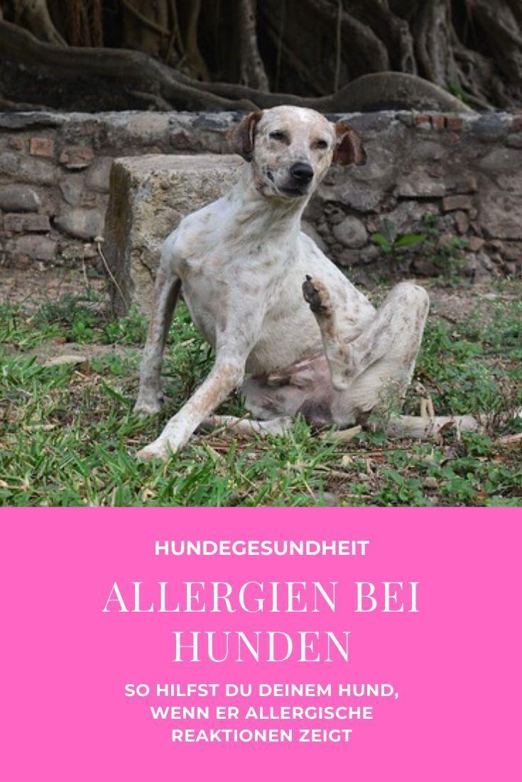 Allergien Bei Hunden Mit Bildern Hunde Hundegesundheit
