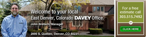 Davey Tree : Expert Tree Service Since 1880 : Tree Service and Lawn Service in East Denver, CO, Supplier of Forest Pansy Redbuds