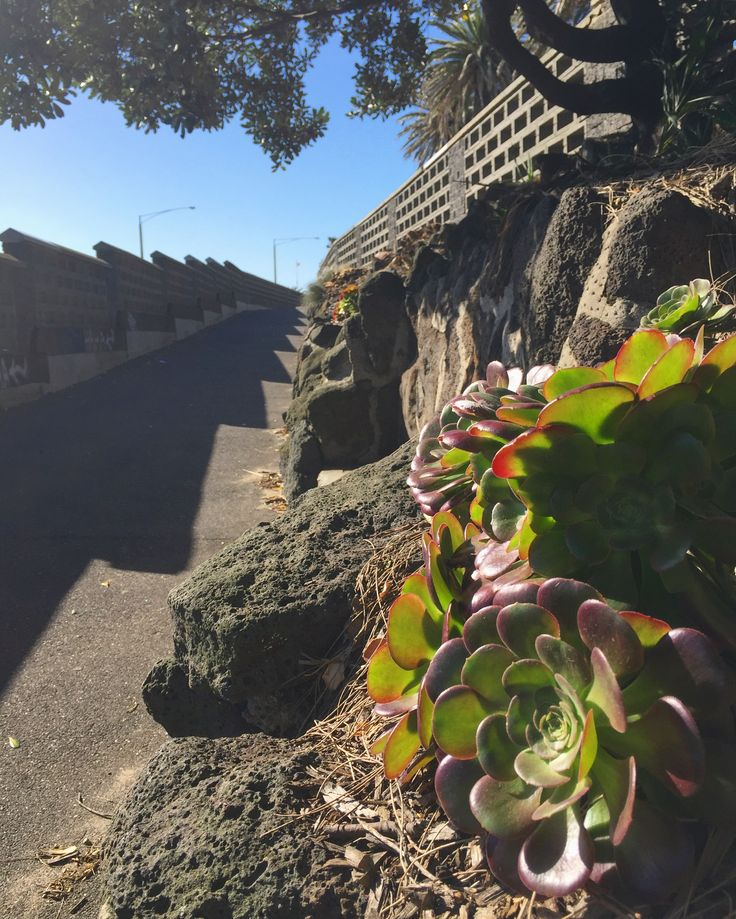 A Salute to S!  Scanty, sandalled and spirited. Slipping through shadows past scaly succulents, along the slanted sidewalk, ready to embrace the salubrious sun. No speaking... Not a sound... Just seamless serendipity.  #sun #succulent #s #musing #wondering #wandering #walking #stkilda #stkildalife #melbourne #melbournelife #australia #salubrious #proyager #proyageraus #putitinaproyager #canvasbag #bag #style #fashion #poetry #poetryinmotion #sunday #everyday