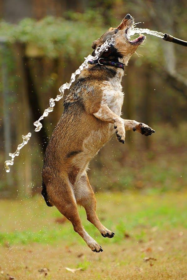 Flying Dog Water Splash