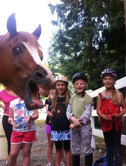 Resultado de imagem para horse photobombs